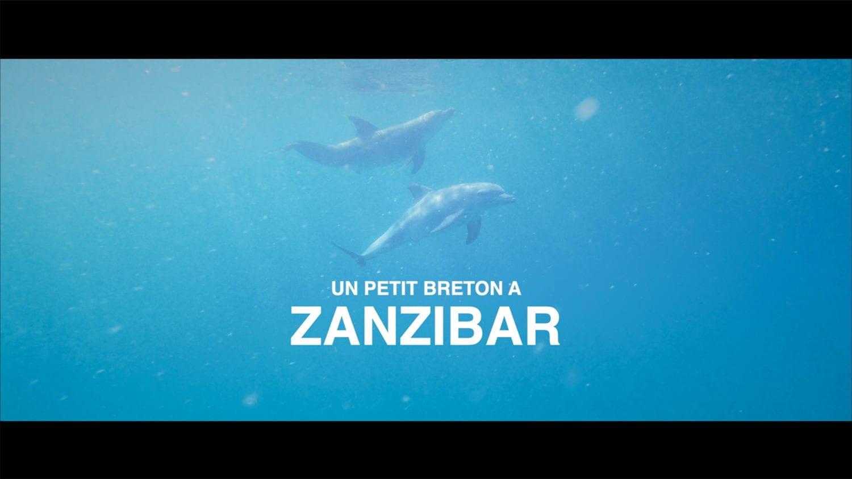 Dauphins dans les eaux bleues de Zanzibar