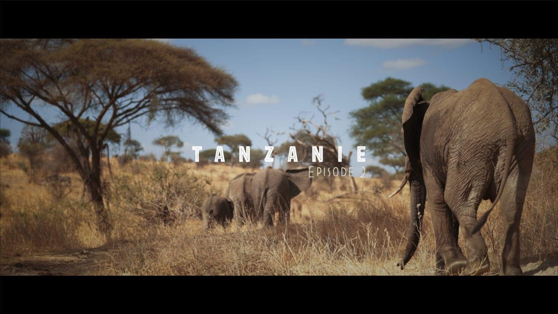 safari éléphants tanzanie