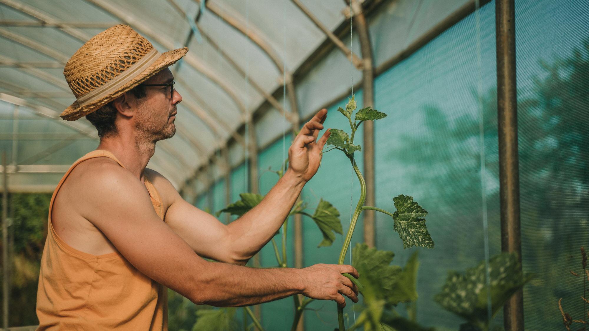 Reportage Photo Brest 20200713 04767 Les Jardins De Kerlomann Légumes Anciens Et Bio En Bretagne Www.antoineborzeix.fr , Photographe & Videaste à Brest / Finistère