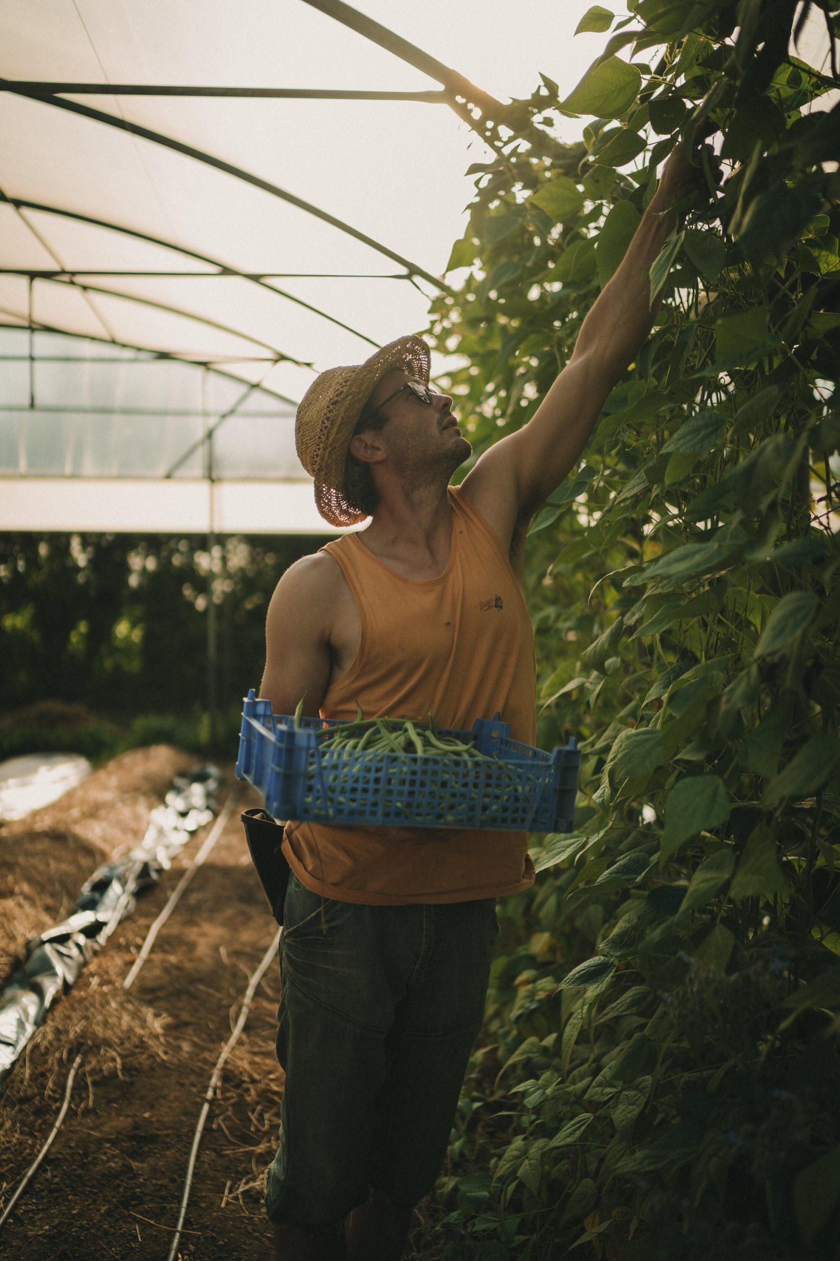 Reportage Photo Brest 20200713 04778 Les Jardins De Kerlomann Légumes Anciens Et Bio En Bretagne Www.antoineborzeix.fr  Scaled, Photographe & Videaste à Brest / Finistère