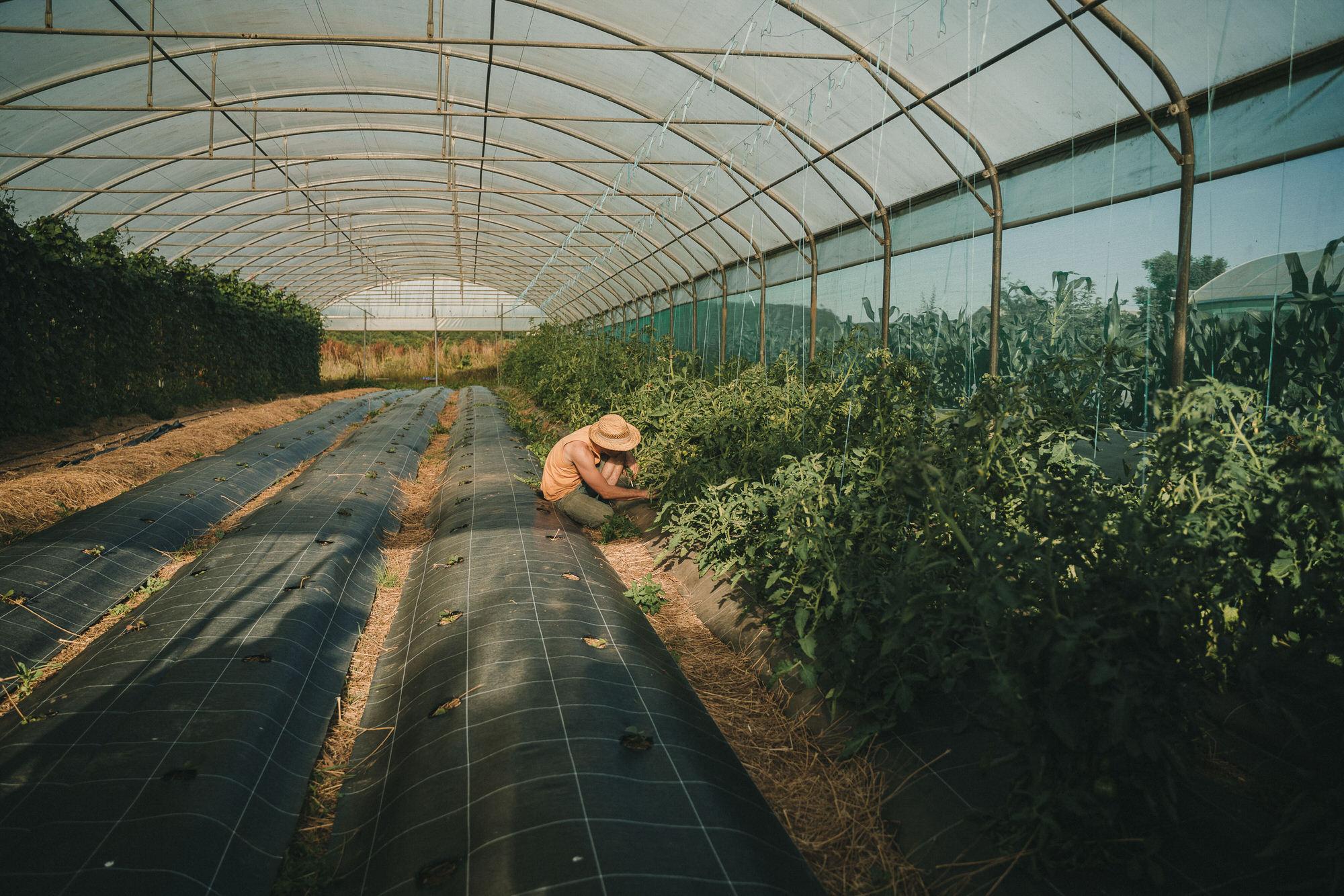 Reportage Photo Brest 20200713 04796 Les Jardins De Kerlomann Légumes Anciens Et Bio En Bretagne Www.antoineborzeix.fr , Photographe & Videaste à Brest / Finistère